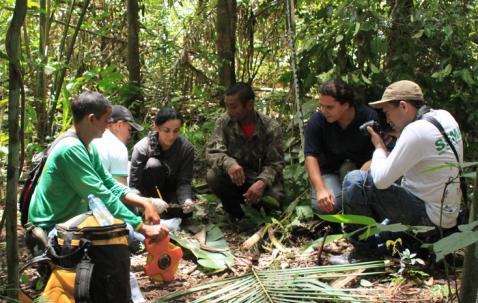 Parcerias institucionais monitoram gavião-real no Pará