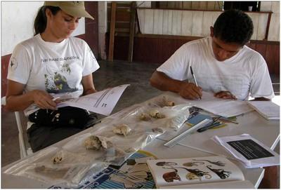 Jovem Cientista Amazônida-FAPEAM. Parintins, 2006.